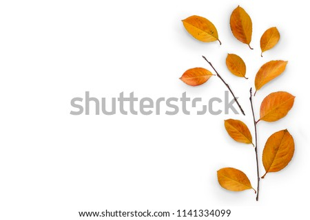 Autumn composition. Fallen yellow leaves and branches. Top view. Minimal concept. Copy space.  #1141334099