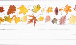 Autumn composition. Frame made of colorful leaves on white  wooden rustic background. Autumn concept. Flat lay, top view, copy space