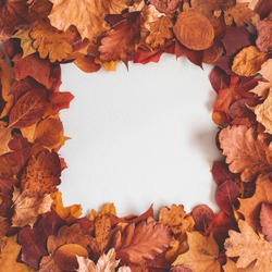 Autumn composition. Frame made of dried leaves on gray background. Autumn, fall, thanksgiving day concept. Flat lay, top view, copy space, square