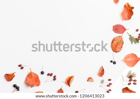Autumn composition made of autumn dry multi-colored leaves and berries of chokeberry, hawthorn on white background. Autumn, fall concept. Flat lay, top view, copy space #1206413023