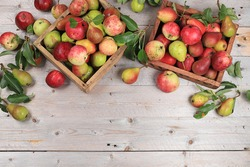 Autumn composition of apples and pears on a sunny table, thanksgiving day background, harvesting, healthy natural food concept, detox diet and body cleansing, place for text,