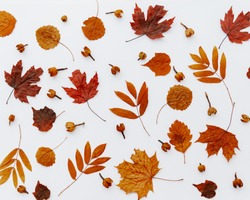Autumn composition of autumn dried leaves on white background. Flat lay, top view. Close up view
