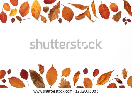 autumn composition of leaves on a white background top view. Place for text, minimalism, insta, flatlay #1202003083