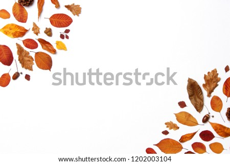 autumn composition of leaves on a white background top view. Place for text, minimalism, insta, flatlay #1202003104