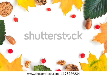 autumn composition on white background #1198999234