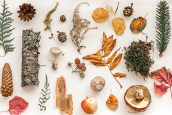 Autumn composition. Pattern made of autumn leaves,  pine cones, mushrooms, Christmas tree branch, bark, apples, moss, snail shell, raspberries. Flat lay, top view. Nature in Belarus.
