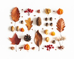 Autumn composition. Pattern made of dried leaves, flowers, berries on white background. Autumn, fall, thanksgiving day concept. Flat lay, top view