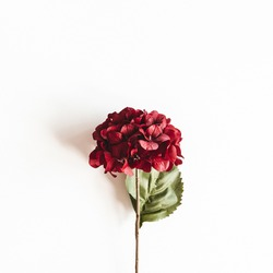 Autumn composition. Red flowers on white background. Autumn, fall concept. Flat lay, top view=