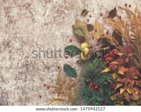 Autumn composition. Rowan branches, branches of apple trees with fruits, branch of goldenrod, vesicle and thuja are on a cement background with scuffs and cracks. Flat lay. #1479942527