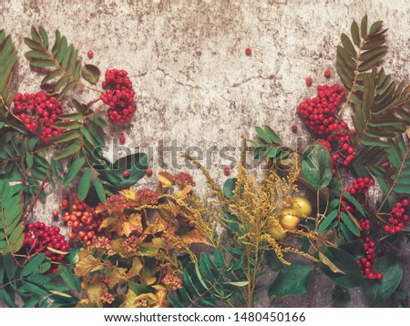Autumn composition. Rowan branches, branches of apple trees with fruits, branch of goldenrod, vesicle and thuja are on a cement background with scuffs and cracks. Flat lay. #1480450166