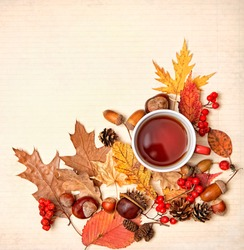 Autumn composition. Tea cup, autumnal leaves, acorns, berries, nuts, cones, chestnut. fall harvest season, thanksgiving day concept. Flat lay, copy space.