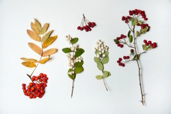 Autumn composition. The collection set is made of branches with berries Symphoricarpos albus, hawthorn and Rowan on a white background. Isolated.