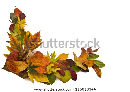 Autumn composition with colorful leaves of different trees in a corner of the frame on a white background