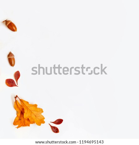 Autumn composition with golden maple and oak leaves on white background. Autumn sale background layout decorate with leaves. Flat lay. Top view. Copy space #1194695143