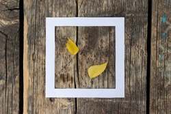 Autumn composition with white hollow paper square and yellow leaves on bright wooden background.