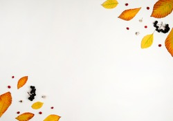 Autumn composition. Yellow and orange leaves, red hawthorn berries and black Rowan berries on a white background.