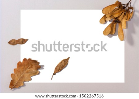 Autumn composition. Yellow autumn oak leaf and maple lionfish on a white square in the center of the frame on a gray background. Creative layout. Flat lay, top view, copy space #1502267516