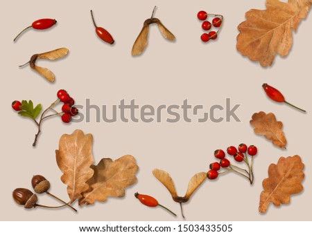 Autumn composition. Yellow autumn oak leaves, acorns, maple lionfish and hawthorn berries on a white square in the center of the frame on a beige background. Creative layout. #1503433505