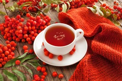 Autumn concept. A cup of hot tea flavored with a scarf and rowan berries on the table.
