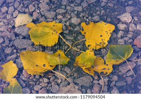 autumn concept, yellow leafs on gravel #1179094504