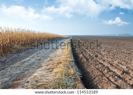 Autumn corn field road