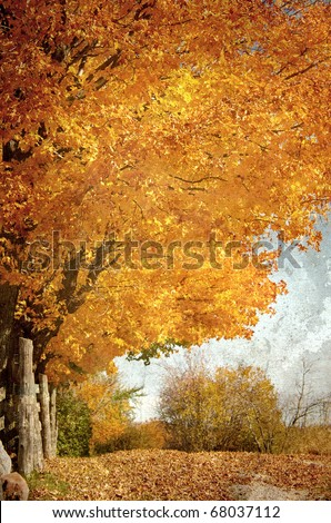 Autumn country lane with trees and a split rail fence with blazing colors and copy space. Grunge textured.