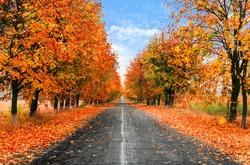 Autumn Country Road With Wet Colorful Trees.