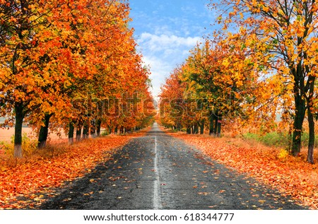 autumn country road with wet...