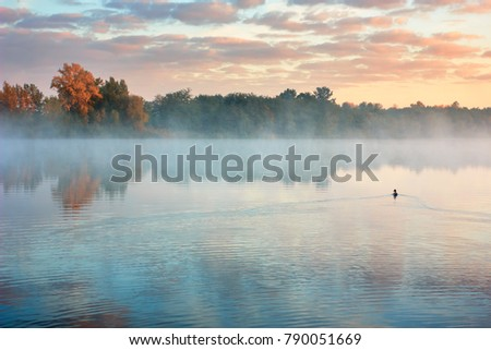 Autumn countryside landscape with river. Lone duck floats on water. Orange trees on river bank in early fog #790051669