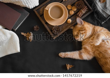 Autumn cozy composition with ginger cat. Seasonal autumnal coziness with cat, soft plaid, coffee and book. Cozy home and hygge concept, copy space.