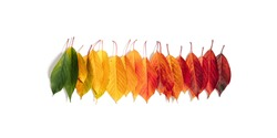 Autumn creative composition. Colorful leaves on white background. Fall leaves. Autumn background. Flat lay, top view, copy space