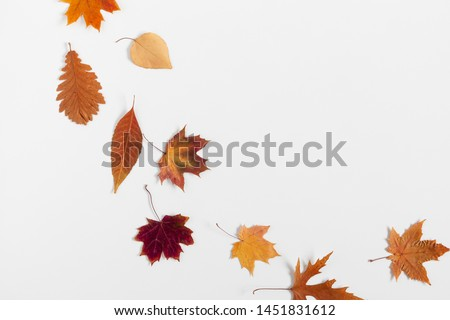 Autumn creative composition. Dried  leaves on white background. Fall concept. Autumn background. Flat lay, top view, copy space