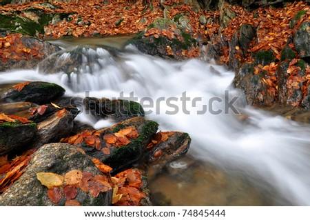 autumn creek in bohemia