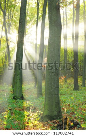 Autumn dawn in forest