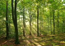 Autumn dawn in magic forest