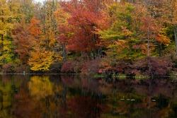 Autumn Dawn on an Impressionist Pond. Destination Gouldsboro State Park in Northeastern Pennsylvania