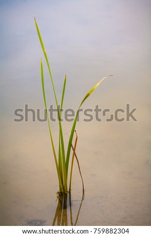 Autumn day. In the frame a lone green reed. Vertical shot. Soft focus. Photo taken in Ukraine, Kiev #759882304