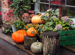 autumn decor, composition with pumpkins and seasonal flowers