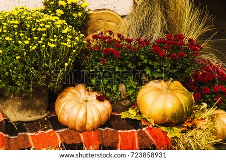 autumn decoration. pumpkin, flowers for composition. autumn harvest #723858931