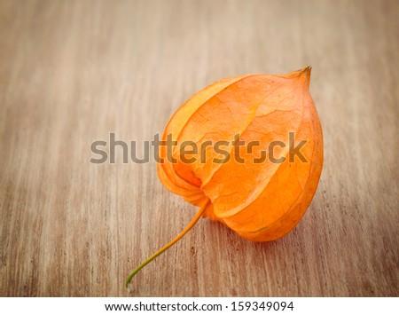 Autumn decoration with   Physalis alkekengi on wood