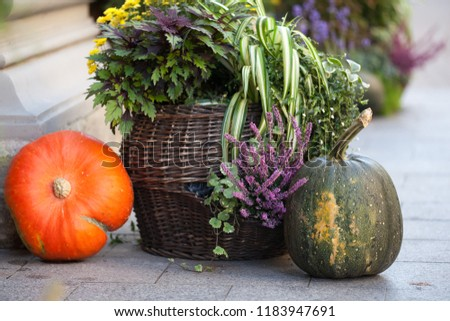 Autumn decoration with pumpkins and flowers on a street in a European city. Harvest of pumpkin. #1183947691