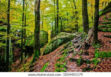 Autumn deep forest landscape #1054401179