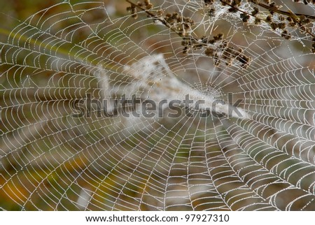 Autumn dew on the web - a frequent guest