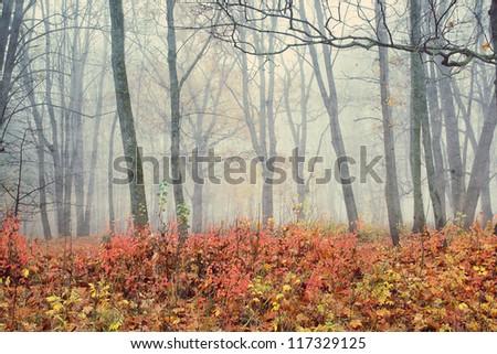 Autumn Dream. Park In Fog. (Cross Process)