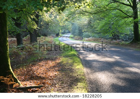 Autumn drive, New Forest, Hampshire