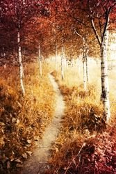 Autumn. Fall. Autumnal Park. Autumn Trees and Leaves. Autumn birch forest