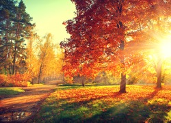 Autumn. Fall. Autumnal Park. Autumn Trees and Leaves in sun light. Autumn scene