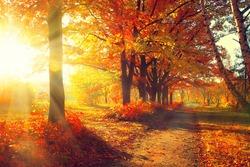 Autumn. Fall. Autumnal Park. Autumn Trees and Leaves in sun rays. Autumn scene