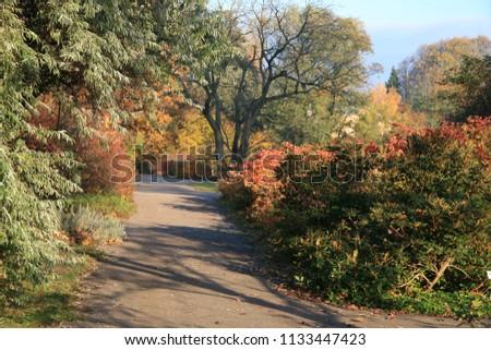 Autumn. Fall. Autumnal Park. Autumn Trees and Leaves in sun rays. Autumn scene. #1133447423