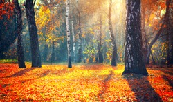 Autumn. Fall. Autumnal Park. Autumn Trees and Leaves in sun rays. Beautiful Autumn scene background, Forest with colorful yellow, red and orange colour leaves, sunflare. Nature backdrop